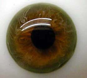 Green Topaz Blown Glass Half round Eyes 22mm
