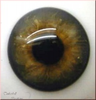 Topaz Blown Glass Half round 24mm